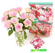 De mooiste rozen als Brievenbusbloemen
