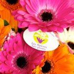 Fairtrade Bloemen - Fair Flowers Fair Plants
