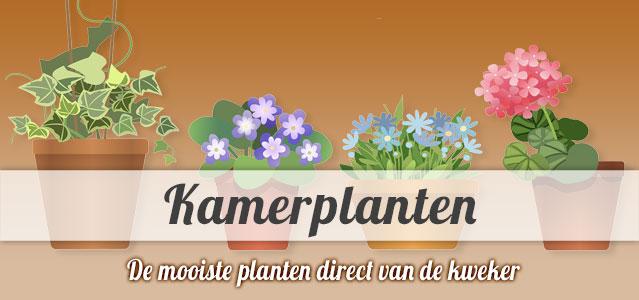 Kamerplanten versturen direct van de kweker